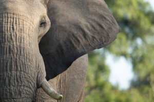 managing cx is like eating an elephant